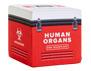 Wrapz Human Organs